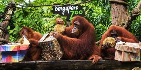 Singapore Zoo tickets, prices, discounts, hours, animals