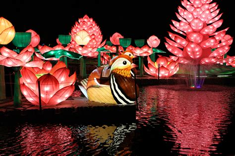 Wild Lights at Dublin Zoo opens with a month of sold-out