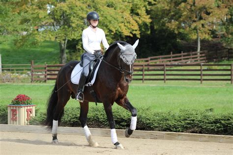 A First Look at Counter Canter - Expert advice on horse